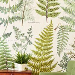 Fototapeta Eijffinger Geonature 366104 Herbarium Green