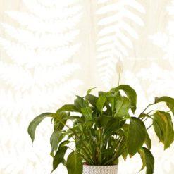 Fototapeta Eijffinger Geonature 366106 Herbarium White